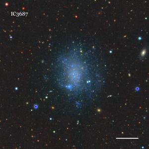 IC3687