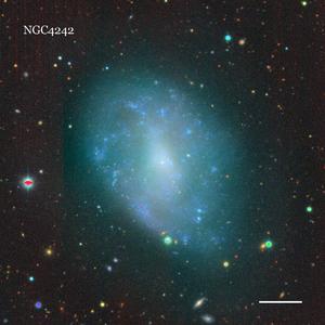 NGC4242